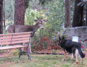 Molly w deer02